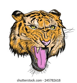 Tiger head sketch and piant color with vector EPS10
