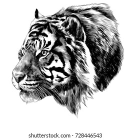 tiger head sketch vector graphics black and white monochrome pattern
