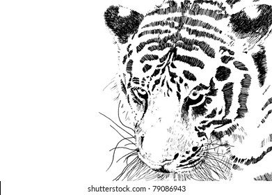 tiger head vector eps 10 of black and white tiger head isolated on white background with copy space