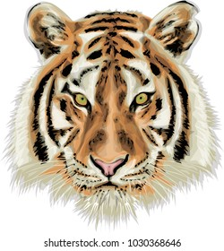 Tiger - High quality vector illustration