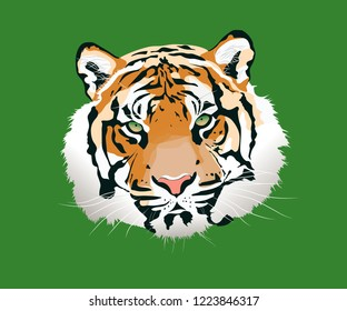 The tiger illustration