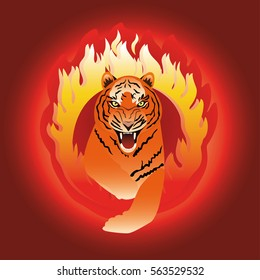 Tiger leaping through  fire hoop.