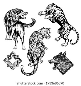 tiger, leopard, wolf vector hand drawn illustrations for designers and other creative use