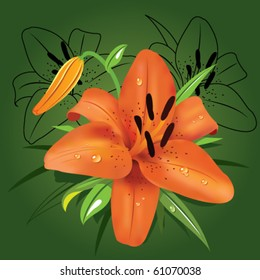 Tiger lily on dark green background