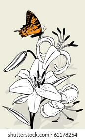 Tiger lily on white background