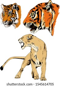 tiger, lions and leopard snarling muzzles drawn in ink by hand, vector without background