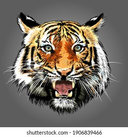 Tiger looking at camera, Tropical animal in asia.- vector illustration