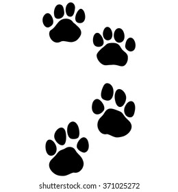 Tiger - paw print. Animal footprint front feet / hind legs isolated on white background. Vector illustration.
