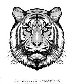 Tiger portrait. Dreamy magic art. Power symbol . Isolated vector illustration. Great outdoors, tattoo and t-shirt design.