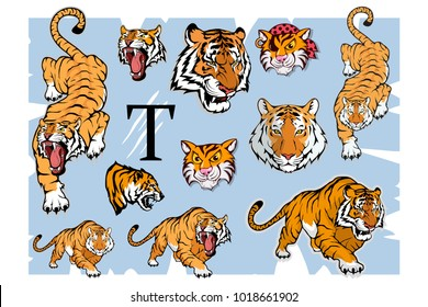 Tiger set, isolated on white background, colour illustration, suitable as logo or team mascot. Bengal Tiger.