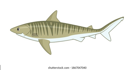 Tiger shark fish on a white background. Cartoon style vector illustration