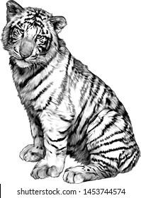 tiger sitting full length, sketch vector graphics monochrome illustration on white background