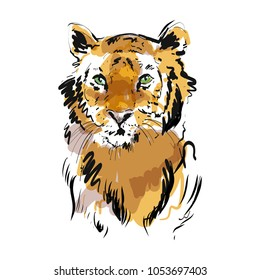 Tiger vector portrait. Hand drawn wild animal illustration
