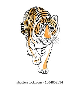 Tiger walking isolated on white background. Illustration. Big cat with blots, spots. Template. Close-up. Clip art. Template. Fashion.