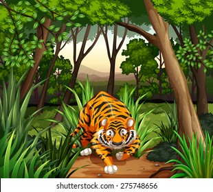 Tiger walking in a jungle