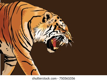 tiger walking and roaring