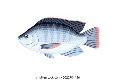 Tilapia fish. Vector illustration cartoon flat icon isolated on white background.