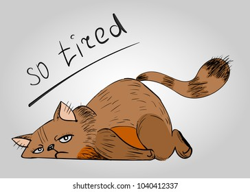 So tired cat, cat on the flo?r