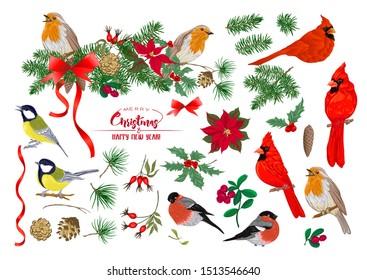 Tit bird, Robin bird, Cardinal bird, Bullfinch. Christmas wreath of spruce, pine, poinsettia, dog rose, fir. Set of elements for design Colored vector illustration. Isolated on white background.