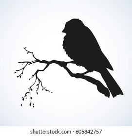 Tit on white sky backdrop. Dark ink hand drawn logo in retro style. Closeup view with space for text