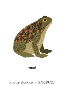 Toad - contradictory amphibian, symbol of wisdom and longevity