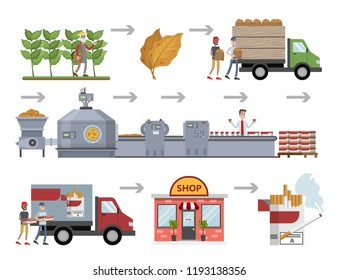 Tobacco for cigarette production. From harvest to automated machinery line on the factory. Product for smoke manufacturing. Cigarette box delivery to the shop. Vector flat illustration