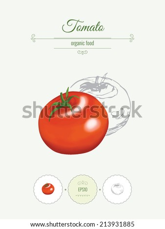 Tomato Banner Illustration Vegetables Organic Food Stock Vector ...