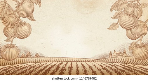 Tomato orchard background with engraved field scenery, copy space for design