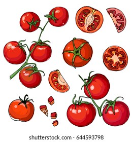 Tomato. Red drawn line. Sketch vector of vegetables. Branch tomatoes.