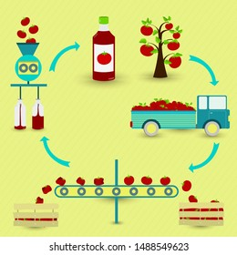 Tomato sauce production steps. Tomato tree, harvest, transport, separation of healthy and rotten tomatoes, processed in factory and botted. In a circular scheme.