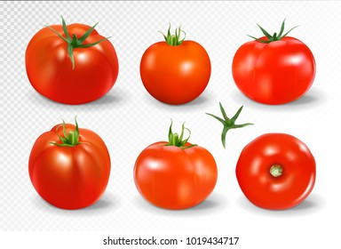 Tomato set. Red tomato collection. Photo-realistic vector tomatoes on transparent background.