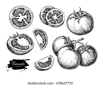 Tomato vector drawing set. Isolated tomato, sliced piece vegetables on branch. Engraved style illustration. Detailed vegetarian food sketch. Farm market product.
