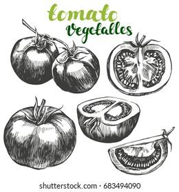 tomato vegetable set hand drawn vector illustration realistic sketch
