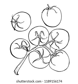 Tomatos. The tomato branch painted with ink on a white background. Sketch of vegetables with mascara and paint. Farm products.