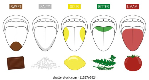 Tongue taste areas. Illustration with five sections of gustation - sweet, salty, sour, bitter and umami - represented by chocolate, salt, lemon, herbs and tomato.