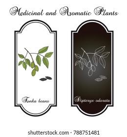 Tonka beans (Dipteryx odorata), aromatic and medicinal plant. Hand drawn botanical vector illustration