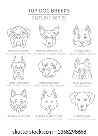 Top dog breeds. Hunting, shepherd and companion dogs set. Pet outline collection. Vector illustration