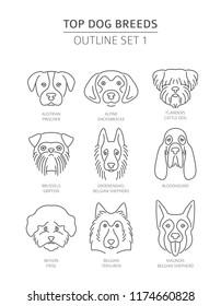 Top dog breeds.Pet outline collection. Vector illustration