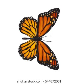 Top view of beautiful monarch butterfly, sketch illustration isolated on white background. color Realistic hand drawing of monarch butterfly on white background