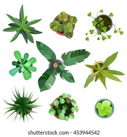 Top view. Big collection plants easy copy paste in your landscape design projects or architecture plan. Isolated flowers on white background. Vector eps10