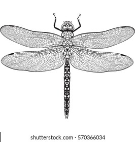 Top view of dragonfly with transparent wings, sketch illustration isolated on white background. black and white Realistic hand drawing of dragonfly insect on white background