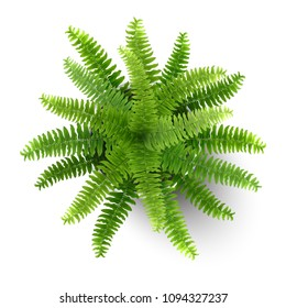Top view of fern in a pot. Houseplant for decorating the worktop. Vector 3d realistic style.