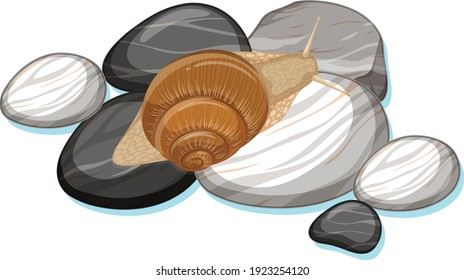 Top view of snail on a stone on white background illustration