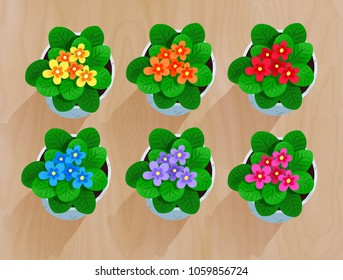 Top view vector collection of flowers in pot on wooden desk background.