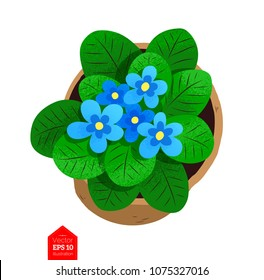 Top view vector illustration of flower in pot isolated on white background.