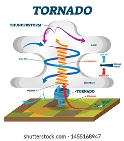 Tornado vector illustration. Labeled educational wind vortex explanation. Weather hurricane scheme with anvil, mesocyclone and cloud base. Updraft air motion that causes dangerous spiral whirlwinds.