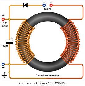 Toroidal field coils generator