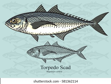 Torpedo Scad, Hardtail scad. Vector illustration with refined details and optimized stroke that allows the image to be used in small sizes (in packaging design, decoration, educational graphics, etc.)