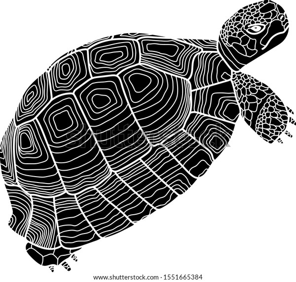 tortoise-graphic-vector-illustration-iso