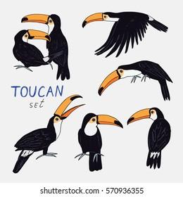toucan bird color set